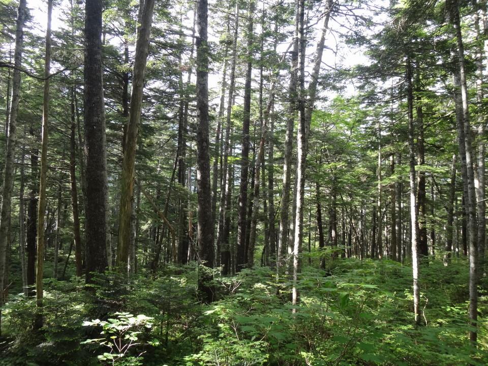 静かな森の中を歩く