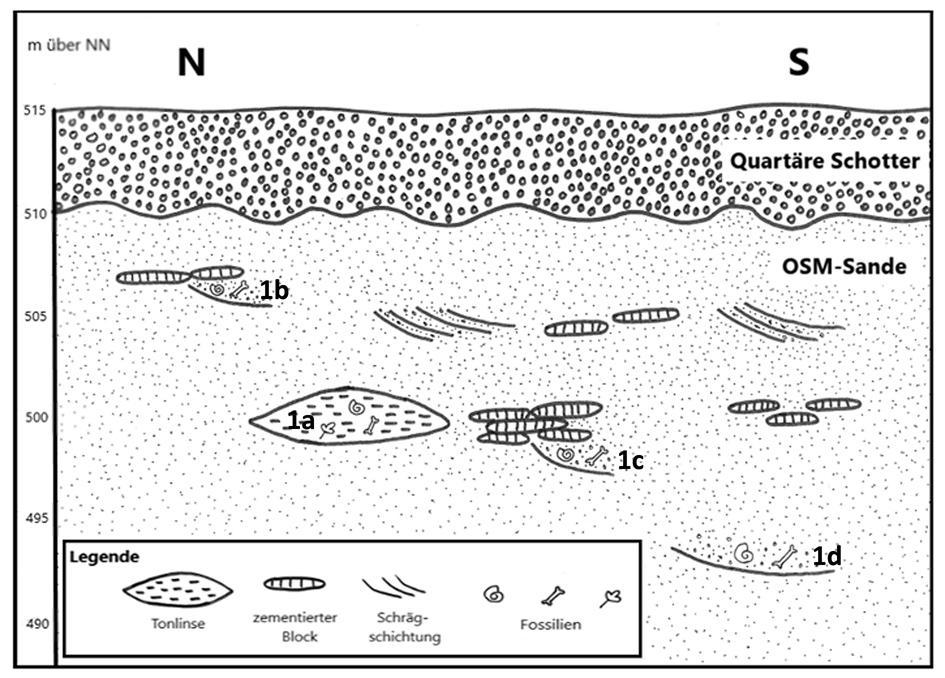 Abb. 9: Schematisches Profil mit den bekannten Fossilfundlagen (1a, 1b, 1c, 1d).