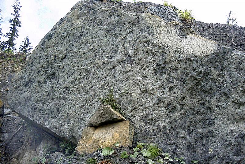"""Abb. 4: Liegende Seite der basalen Stockletten (""""Basisbank""""; der Fundort des Wirbels ist abgedeckt) mit Grabgängen, wahrscheinlich verursacht durch unbekannte Krebse."""
