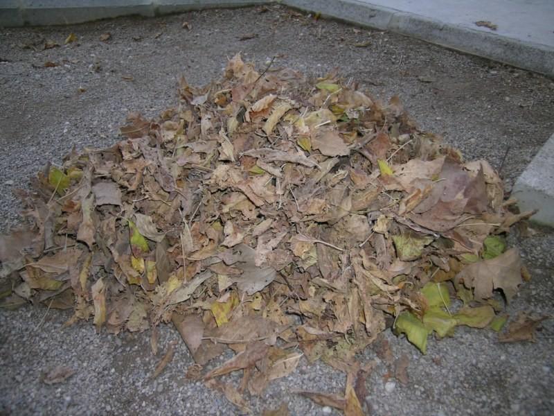 Montón de hojas