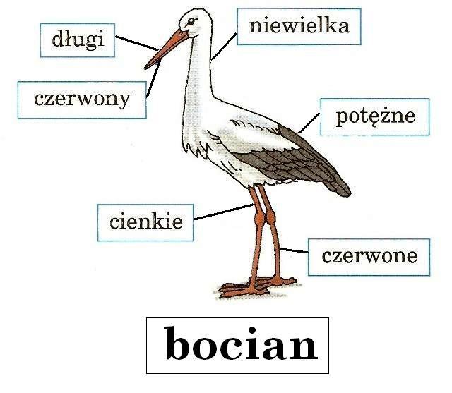 Bocian - beatam2016
