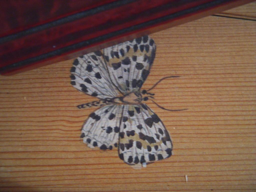 le farfalline di Corinna