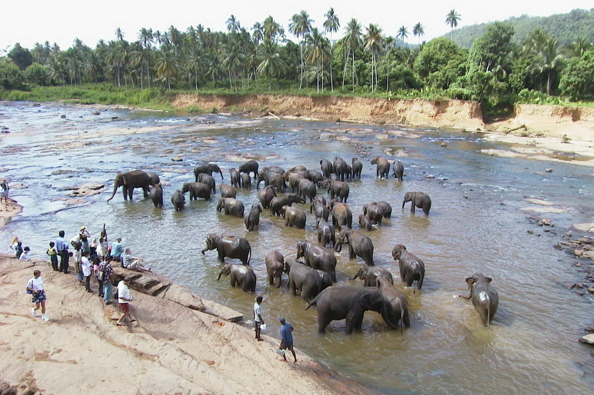 Pinnawela - Elefantenwaisenhaus