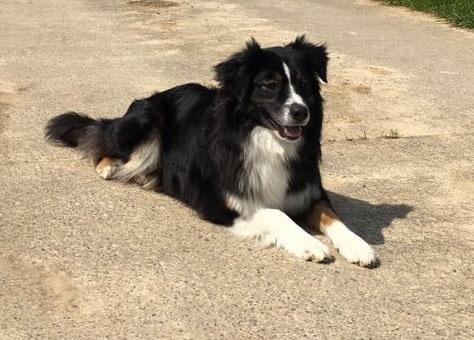 Lala ist Familienhund