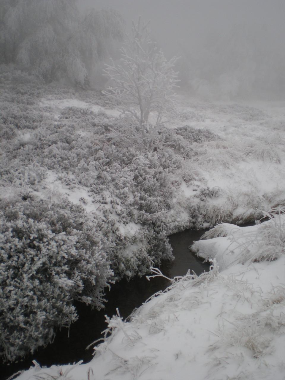 Les  sources du Lignon en hiver dans une tourbière