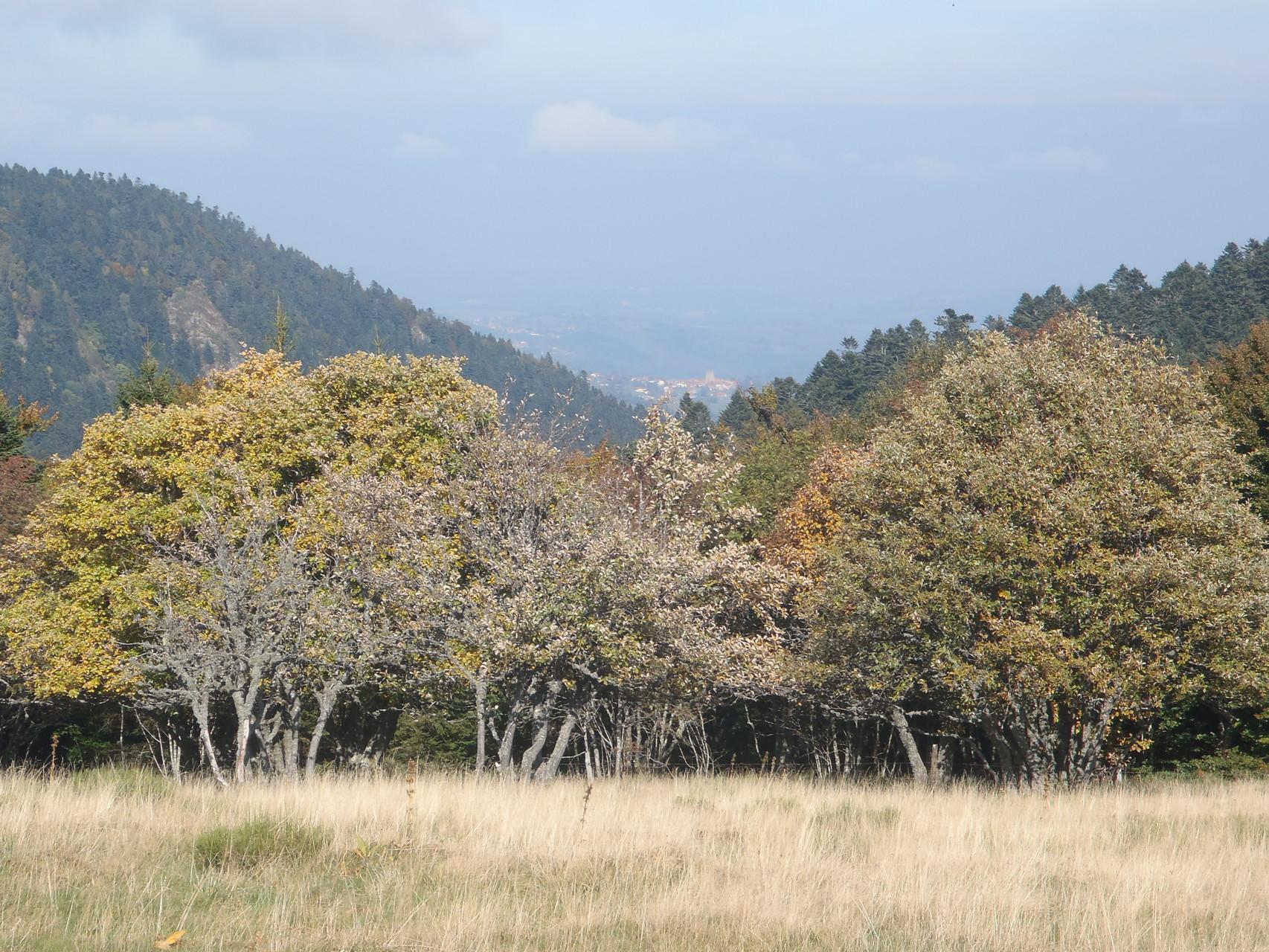 Vue de Sauvain dans le creux de la vallée du Pierre-Brune