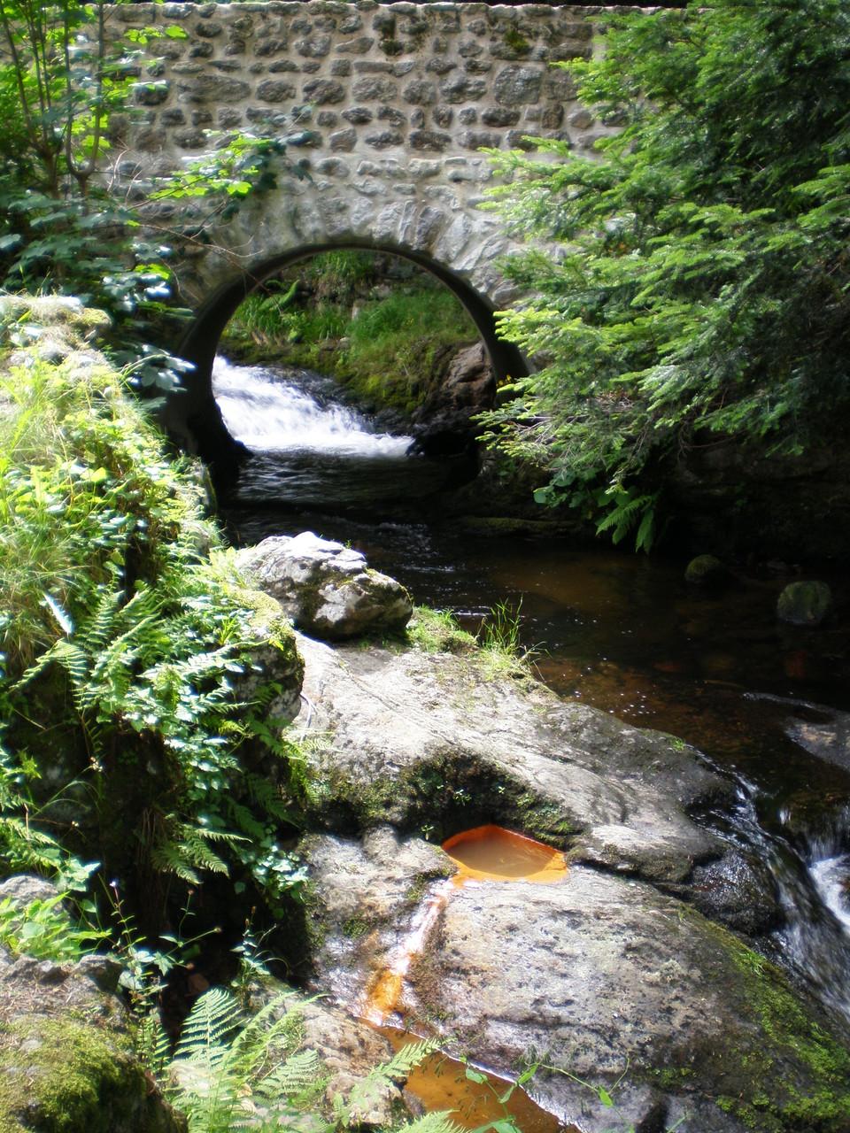 Source de Fonfort - en bordure de rivière