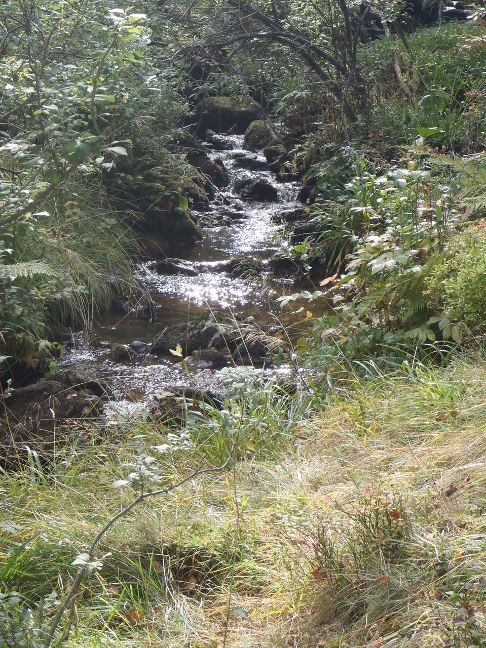 Le Pierre-Brune en amont de la cascade de Chorsin