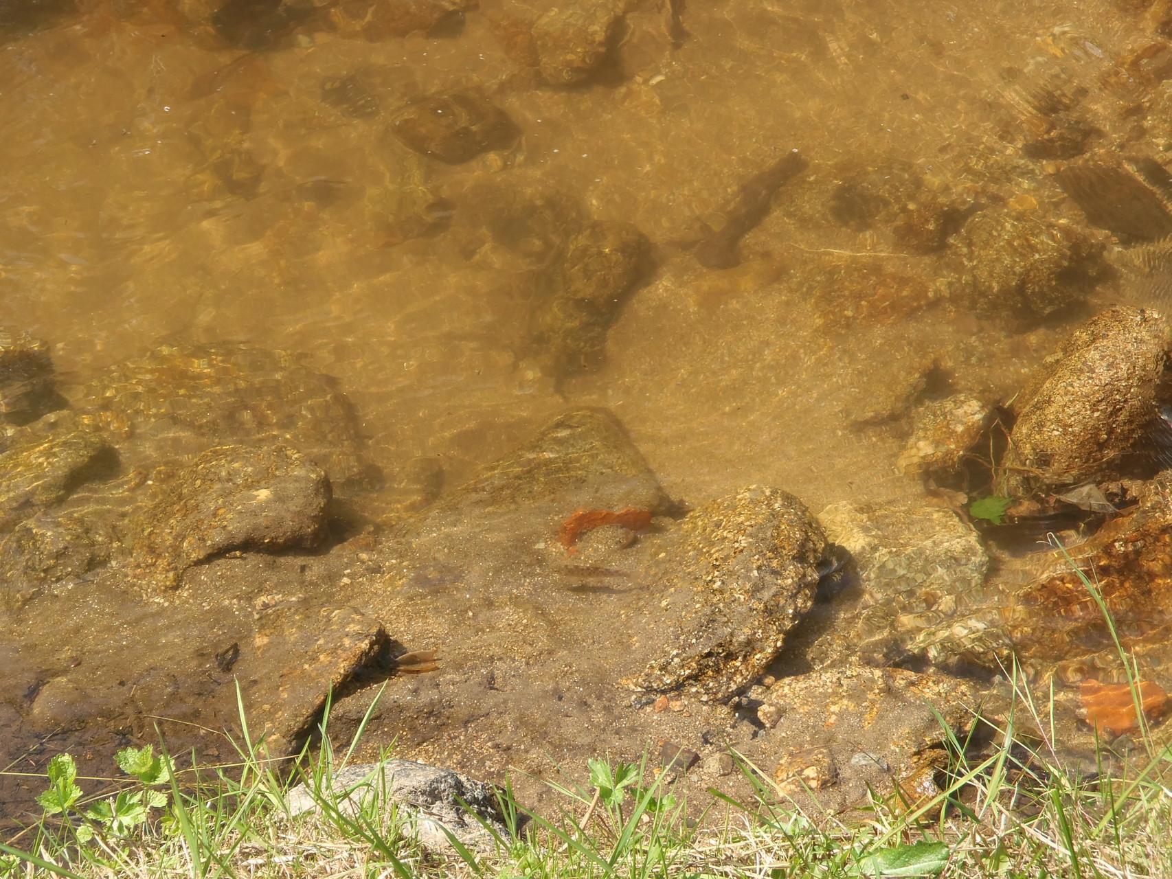 Truitelles dans la réserve