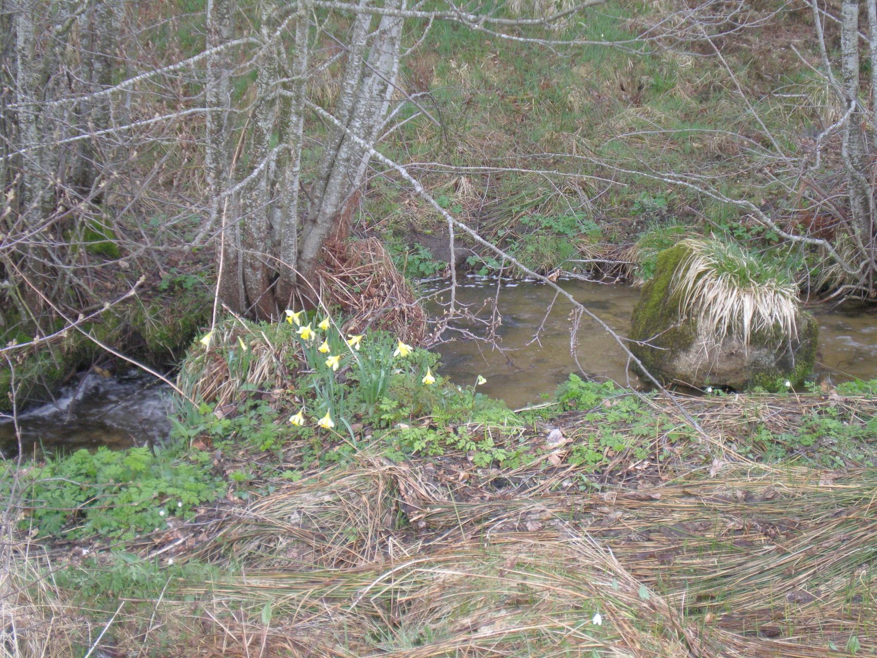 Le Charavan au printemps