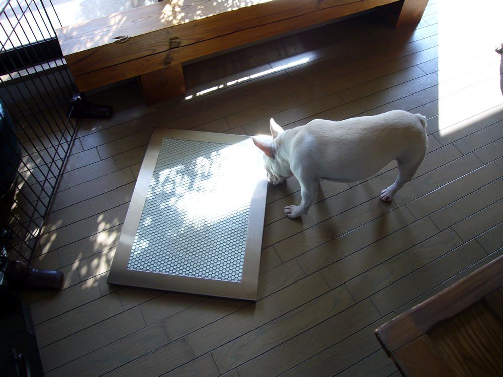 犬用ステンレス製トイレ・トレイとおもちちゃん