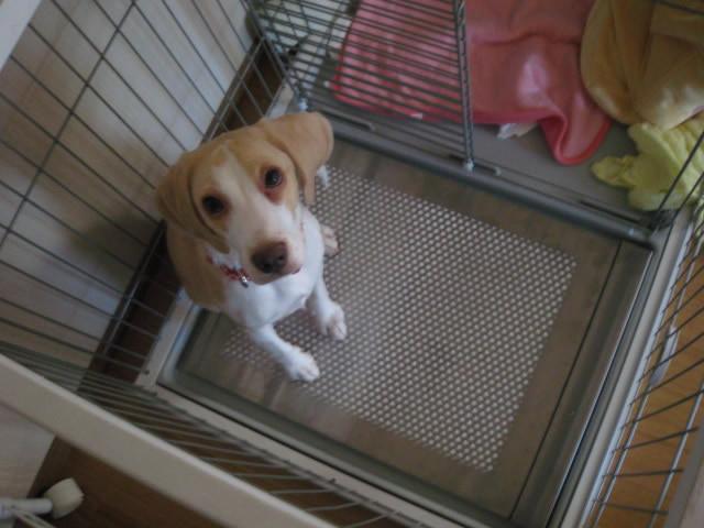 特注の犬用ステンレス製トイレ・トレイでいたずらがなくなり、みんな笑顔に!