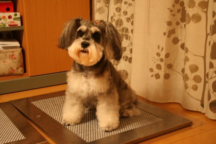 犬用ステンレス製トイレ・トレイと零ちゃん