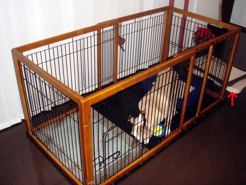 ブルドッグのピットちゃん、犬用ステンレス製トイレ・トレイと初対面です。