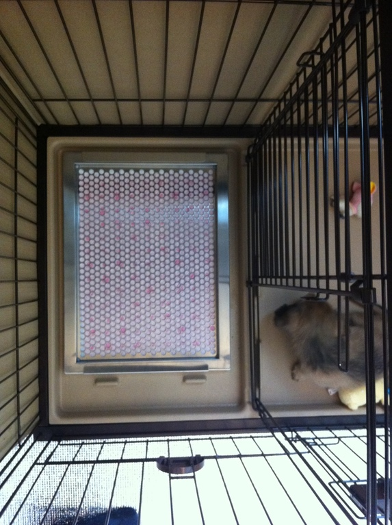 犬用ステンレス製トイレトレイ(段付きタイプ・レギュラーサイズ相当)設置完了!