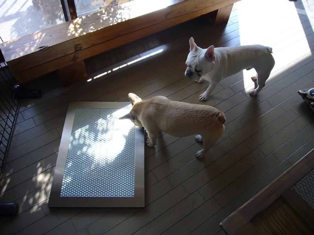 犬用ステンレス製トイレ・トレイとおもちちゃんとおこげちゃん
