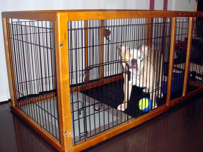 ブルドッグのピットちゃん、犬用ステンレス製トイレ・トレイで、イタズラがなくなり、安心。