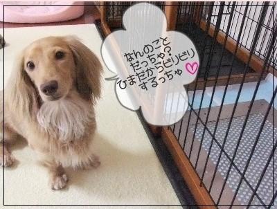 モカちゃんと犬用ステンレス製トイレ・トレイ