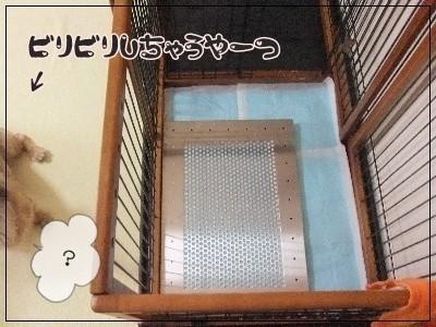 犬用ステンレス製トイレ・トレイ(ケージ内)