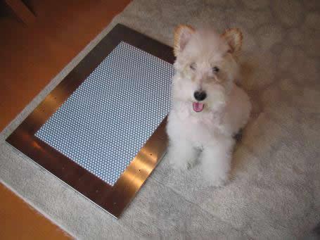 リビングに犬用ステンレス製トイレ・トレイ