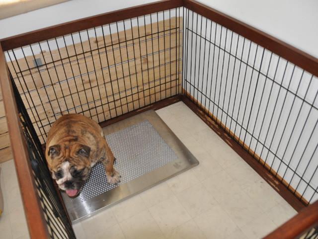 犬用ステンレス製トイレ・トレイ使用中
