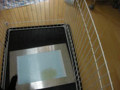 初めてのステンレス製トイレでも上手におしっこできました^^。