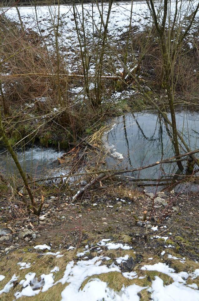 Kleiner Biberdamm der errichtet wurde unterhalb des grösseren Dammes um so das gefällte Holz besser transportieren zu können.