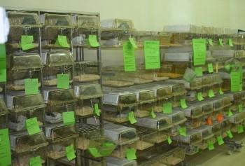 Die Haltung von Ratten und Mäusen erinniert eher an ein Schraubenlager: Regale voller Plastikkästen.  Foto: Ärzte gegen Tierversuche e.V.