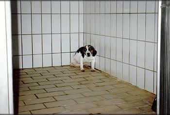 Haltung eines Beagles in einem deutschen Universitätslabor.  Foto: Ärzte gegen TIerversuche e.V.