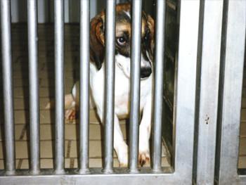 Hunde werden oft einzeln in kahlen Käfigen ohne jegliche Beschäftigungsmöglichkeit gehalten.  Foto: Ärzte gegen Tierversuche e.V.