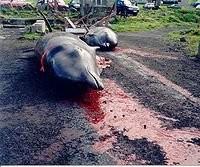 Toter Delfin