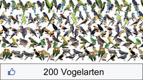 Graphik 200 Vogelarten