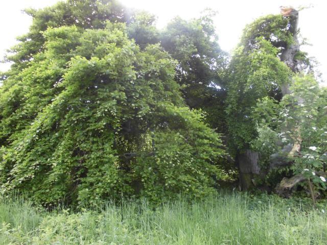Dies ist nur ein Baum