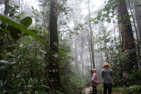 Kinder stehen staunend im Regenwald