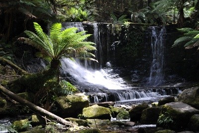 Tasmanischer Regenwald