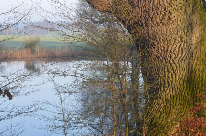 Der Teich am Sandfeld
