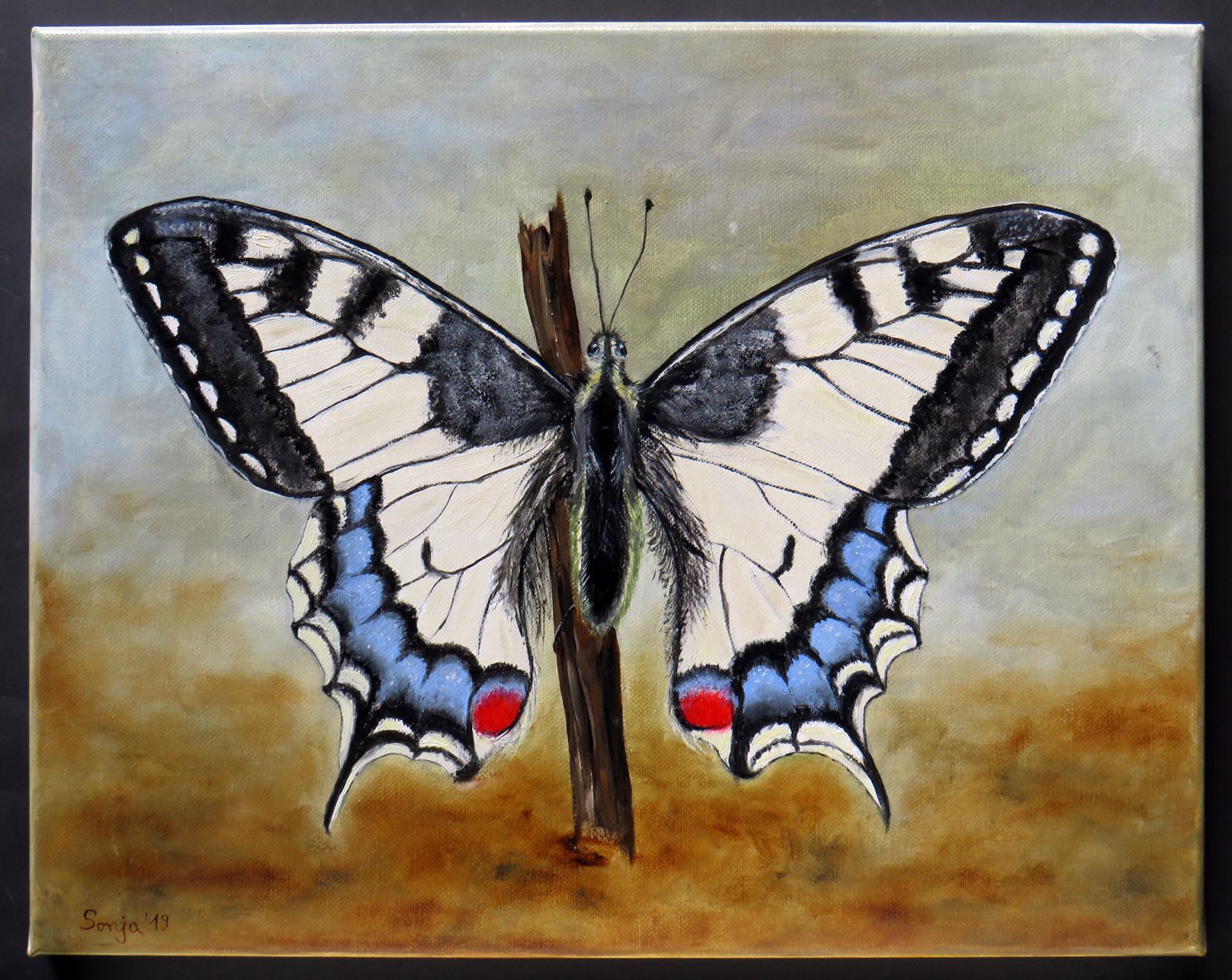 """""""Schwalbenschwanz"""", Öl auf Leinwand, 40 x 50 cm"""