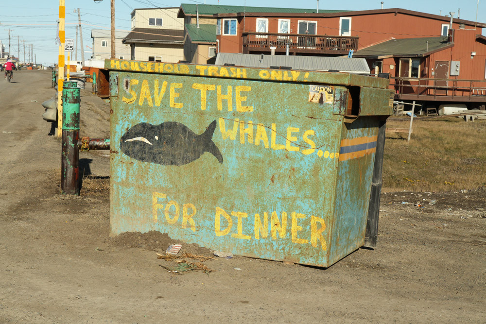 Barrow - Save the Whales... for Dinner ;) - Alaska 2013