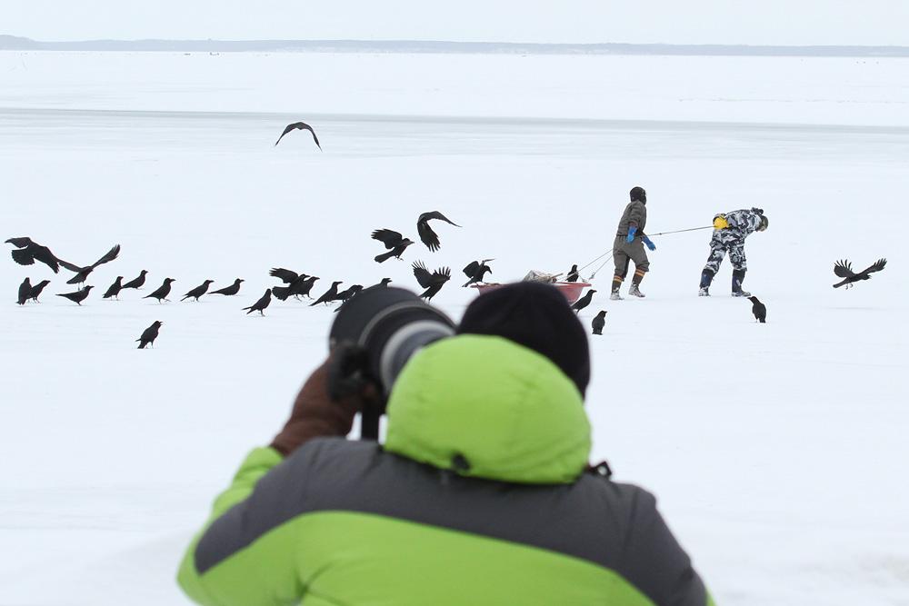 Bei den Riesenseeadler - Nemuro, Hokkaido - Japan 2015