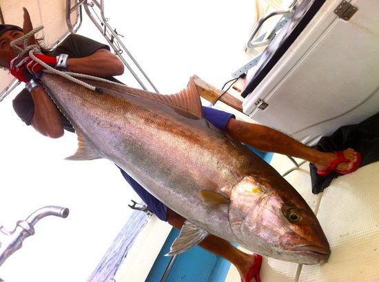 amberjack fishing of ishigaki okinawa