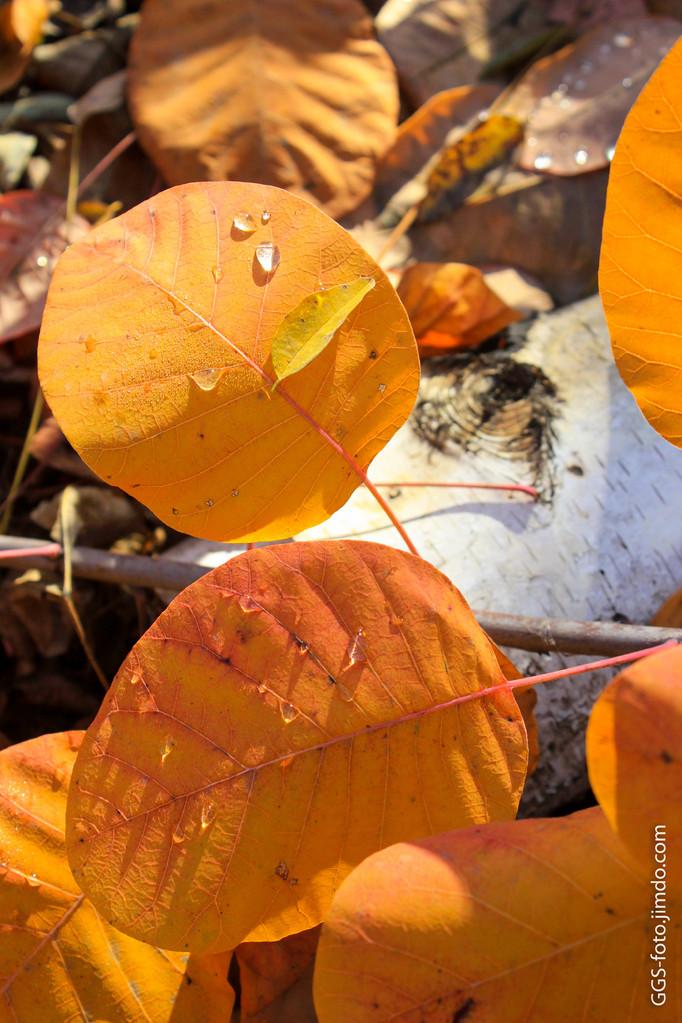 Оранжевое солнце, оранжевая осень, оранжевые капли, оранжевый листок...