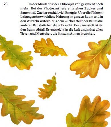 Illustration SJW Heft Bäume