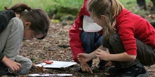 Klassenzimmer Natur: Kinder lernen draussen
