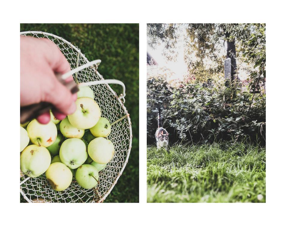 apfel frühe sorten, Bauerngarten