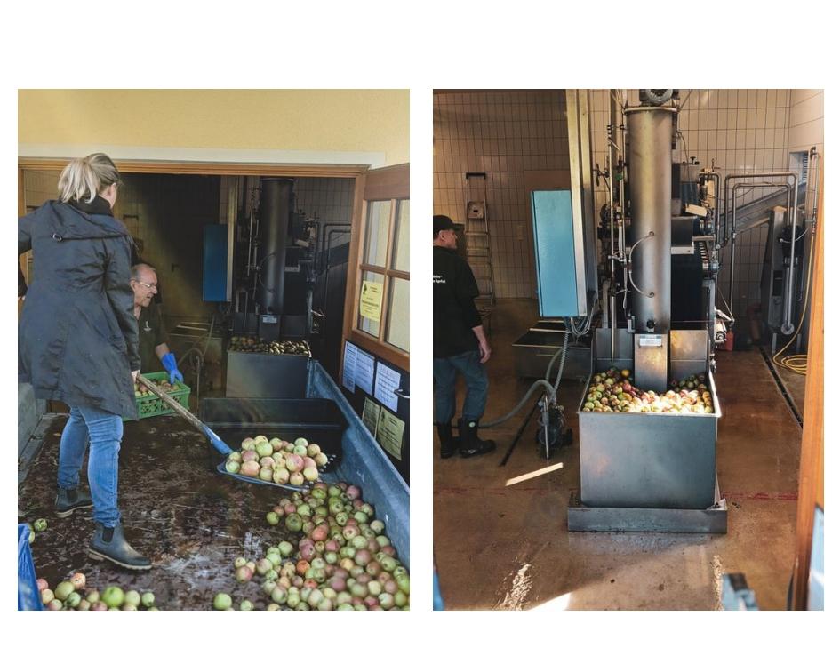 Apfelsaft pressen