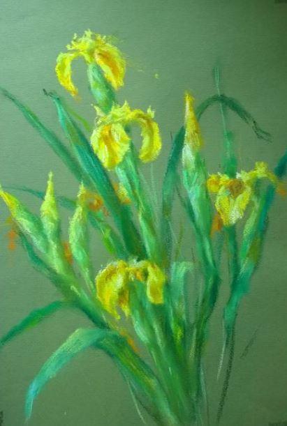 Iris jaune 42x30
