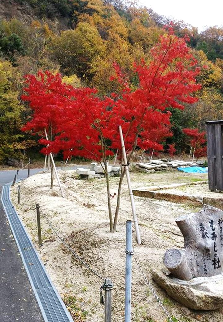 備前国総社宮の御正殿の周りに植樹された紅葉の写真1