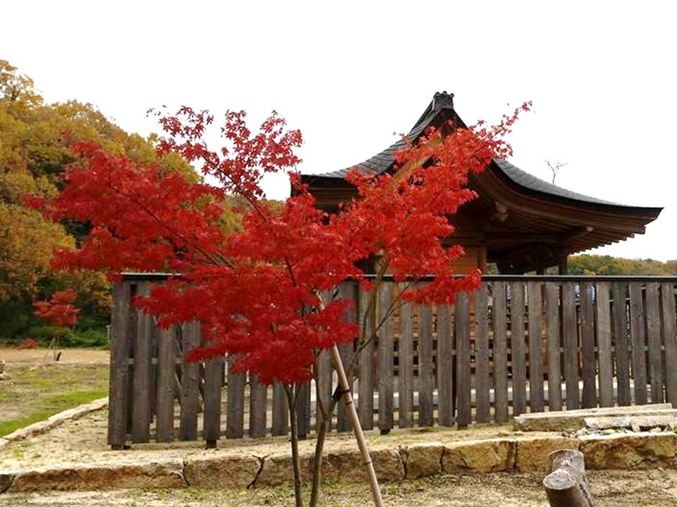 備前国総社宮の御正殿の周りに植樹された紅葉の写真3