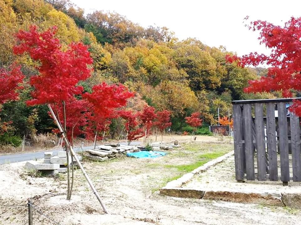 備前国総社宮の御正殿の周りに植樹された紅葉の写真2
