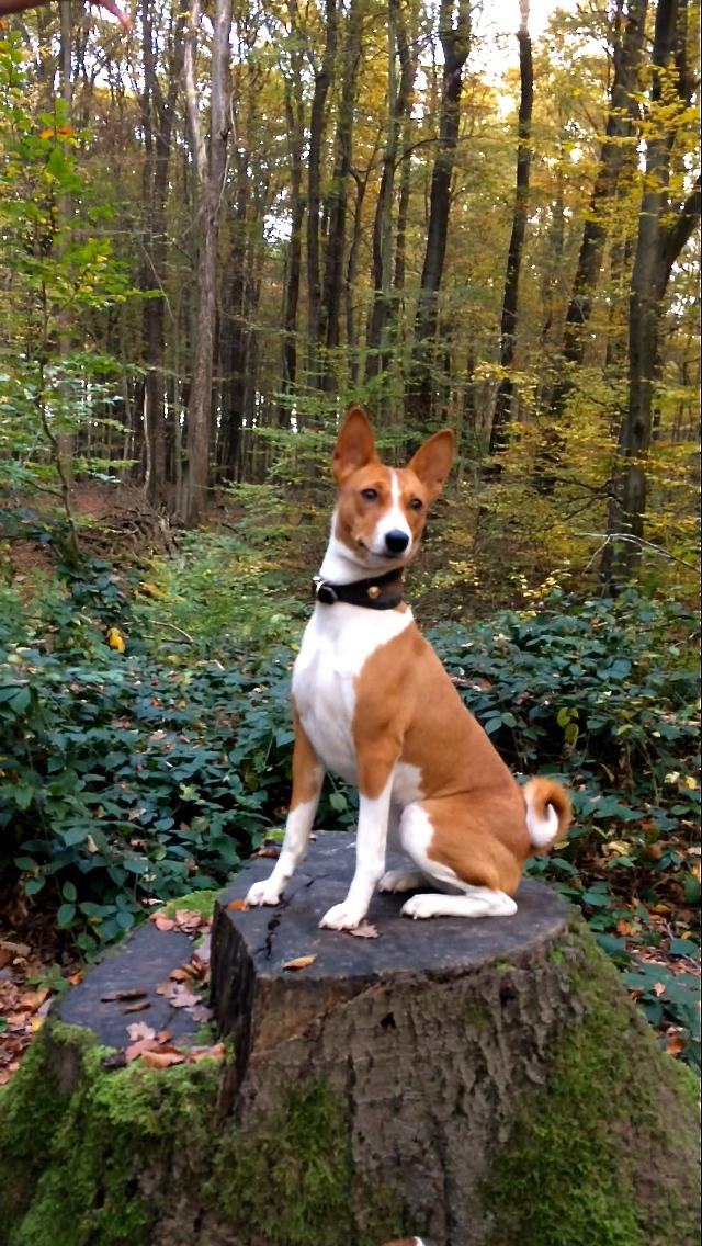 Die hübsche Zasu im Wald....